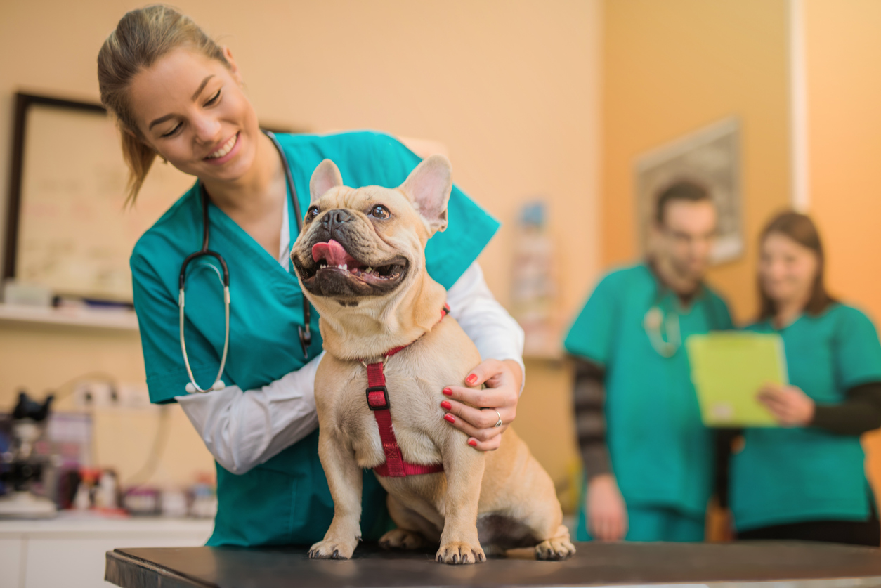 A Veterinarian's Guide to Student Loan Refinancing